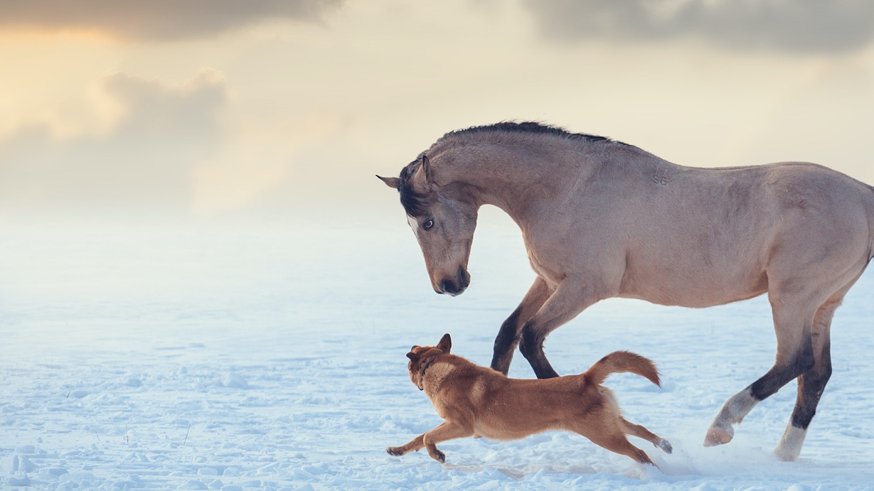 Canine & Equine Chiropractic
